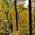 Deep Woods by Todd Hostetter