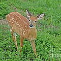 Deer 11 by Cassie Marie Photography