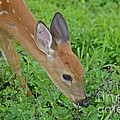Deer 12 by Cassie Marie Photography