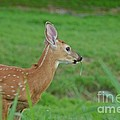 Deer 13 by Cassie Marie Photography