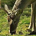 Deer 2009 by Glenn Bautista