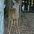 Deer 3 by Cassie Marie Photography