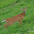 Deer 6 by Cassie Marie Photography