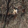 Deer Ahead by David Rosenthal