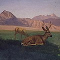 Deer by Albert Bierstadt