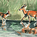 Deer At The River by Genevieve Esson
