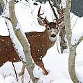 Deer Buck In Winter by Peggy Collins