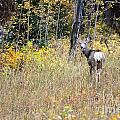 Deer Camoflauged by Deanna Cagle