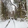 Deer Crossing by Brian Wallace