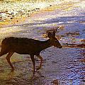 Deer Crossing by Jeff Swan