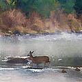 Deer Crossing Stream Panoramic by Dan Friend