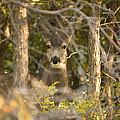 Deer Frame by Dawn Morrow