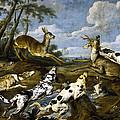 Deer Hunting by Paul de Vos