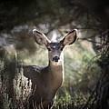 Deer I by Brandi Maher