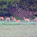 Deer-img-0128-005 by Travis Truelove