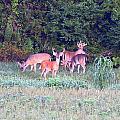 Deer-img-0156-002 by Travis Truelove