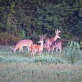 Deer-img-0158-001 by Travis Truelove
