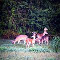 Deer-img-0158-003 by Travis Truelove
