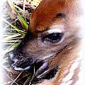 Deer-img-0349-002 by Travis Truelove