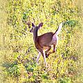 Deer-img-0456-001 by Travis Truelove