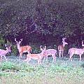 Deer-img-0470-002 by Travis Truelove