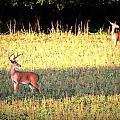 Deer-img-0627-001 by Travis Truelove