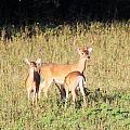 Deer-img-0642-001 by Travis Truelove