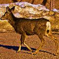 Deer In A Different Light by Jo-Anne Gazo-McKim