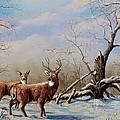 Deer In Crete by Laurine Baumgart