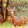 Deer In Forest by Donna Haggerty