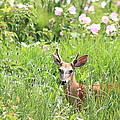 Deer In Magee Marsh by Dan Sproul