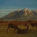 Deer In Mountain Home by Albert Bierstadt
