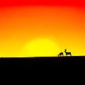 Deer In Silhouette by Debi Bishop