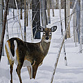 Deer In The Snow by Bill Dunkley