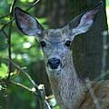 Deer In The Woods by Ben Upham III