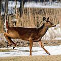 Deer Jump by Christy Pollard