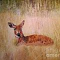 Deer by Kimatha Kesner