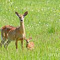 Deer Me by Cheryl Baxter
