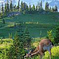 Deer Mountain by Rylee Stearnes