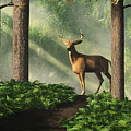 Deer On A Forest Path by Daniel Eskridge