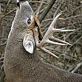 Deer Pictures 444 by World Wildlife Photography
