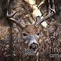 Deer Pictures 449 by World Wildlife Photography