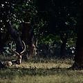 Deer Portrait by Naveen Krishnan