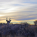 Deer Ridge - Sunset Buck by Mike and Sharon Mathews
