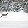 Deer Running by Aimee L Maher ALM GALLERY