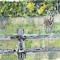 Deer Scene by Kevin  Harding