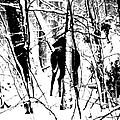 Deer Shadow by Michael Krek
