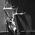 Deer Skull by Brooke T Ryan