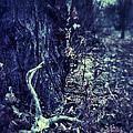 Deer Skull In Forest by Jill Battaglia