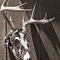 Deer Skull In Sepia by Brooke T Ryan
